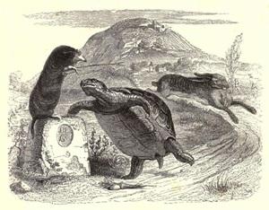 Blog-Tortoise